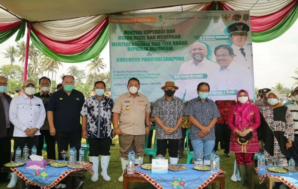 Kunjungan Kerja Menteri BPN ATR, Menteri Koperasi dan UKM di Tanggamus Tinjau Kebun Pisang Mas